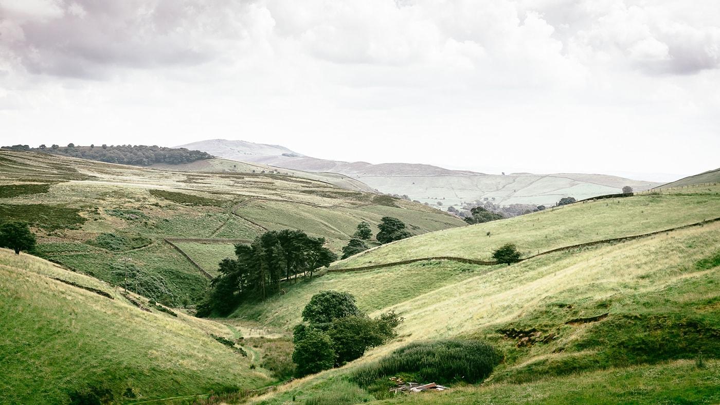 Types of Fields